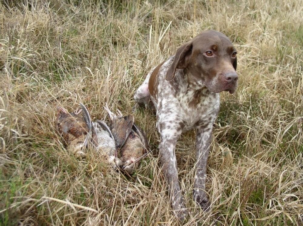 Accessoires pour nos compagnons chien de chasse